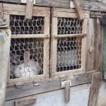ферма по разведению кроликов